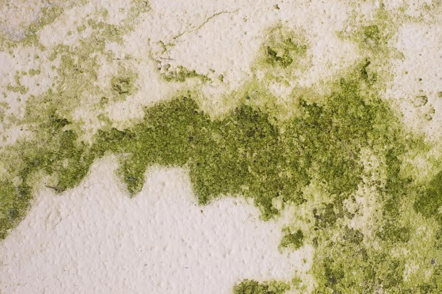 5 home wall painting related problems to watch out this monsoon ForFungal Wash For Exterior Walls