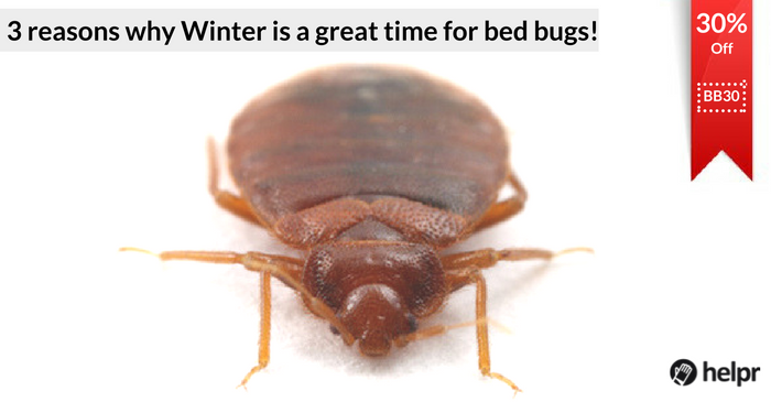 do bed bugs like the cold - 28 images - the best 28 images of do bed bugs die in the cold a bed ...