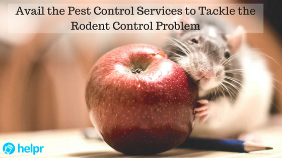 Avail the Pest Control Services to Tackle the Rodent Control Problem - feature
