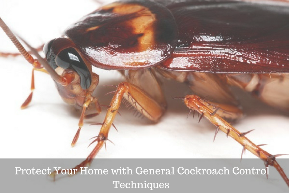 Protect Your Home with General Cockroach Control Techniques - feature